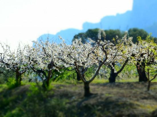 3 blossom web