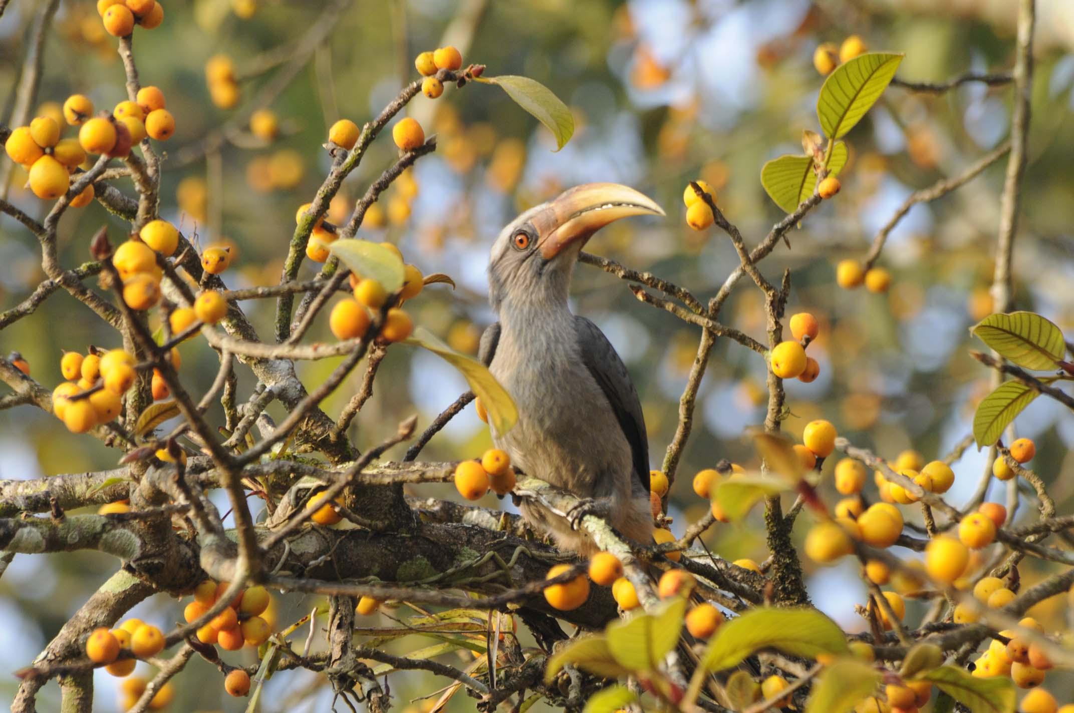 Bird Karnataka